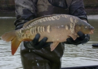 UK Carp Suppliers, Combley Carp Fisheries