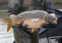 UK Carp Suppliers, Combley Carp Fisheries