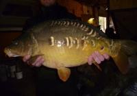combley 2014 c2 an fish for sale 107