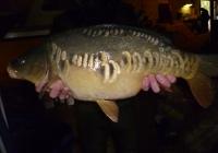 combley 2014 c2 an fish for sale 112